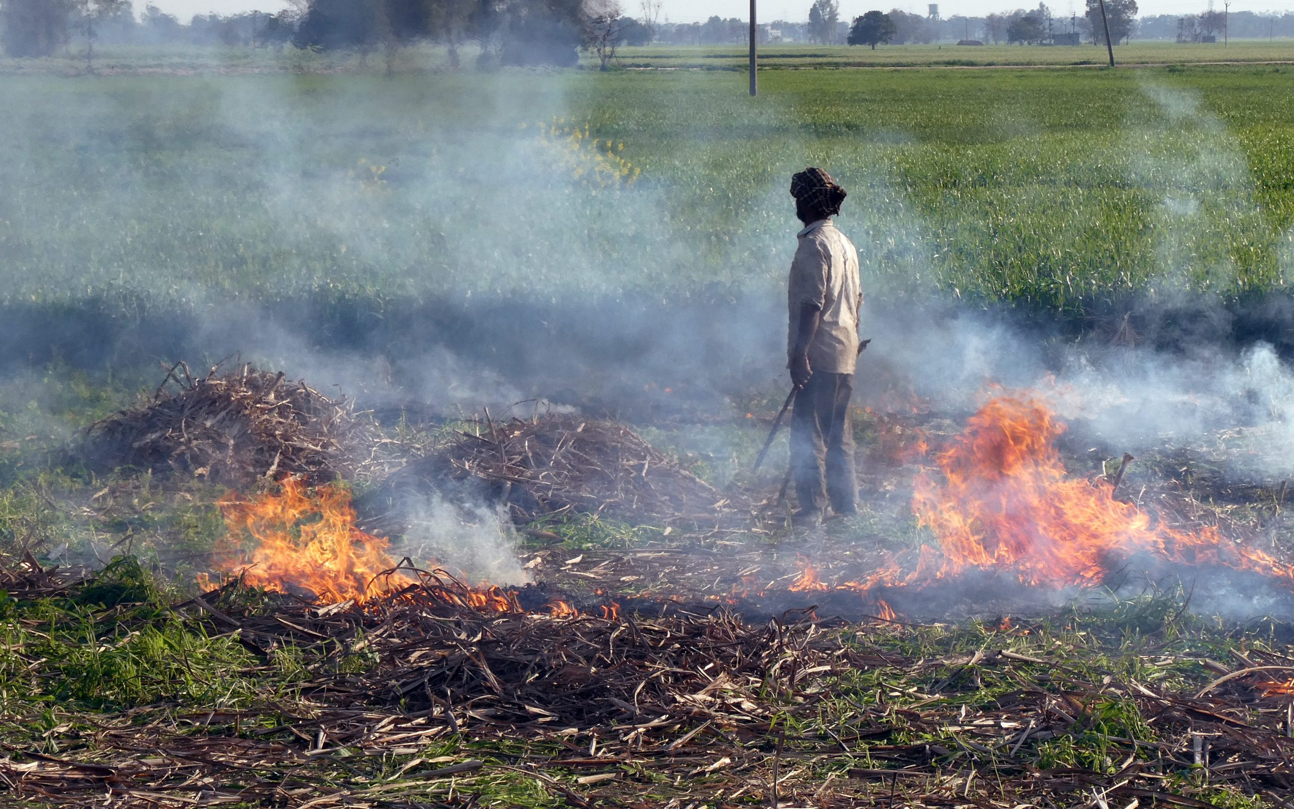 Determining the role of crop residue burning in post-monsoon air quality degradation across Northern India