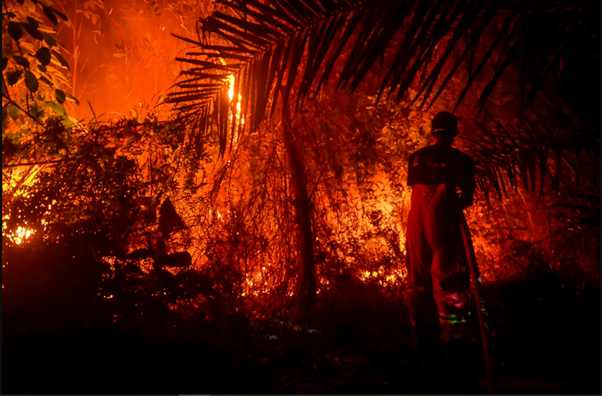 Simulations show Large Human-made Wildfires in Indonesia Impact on El Niño Weather
