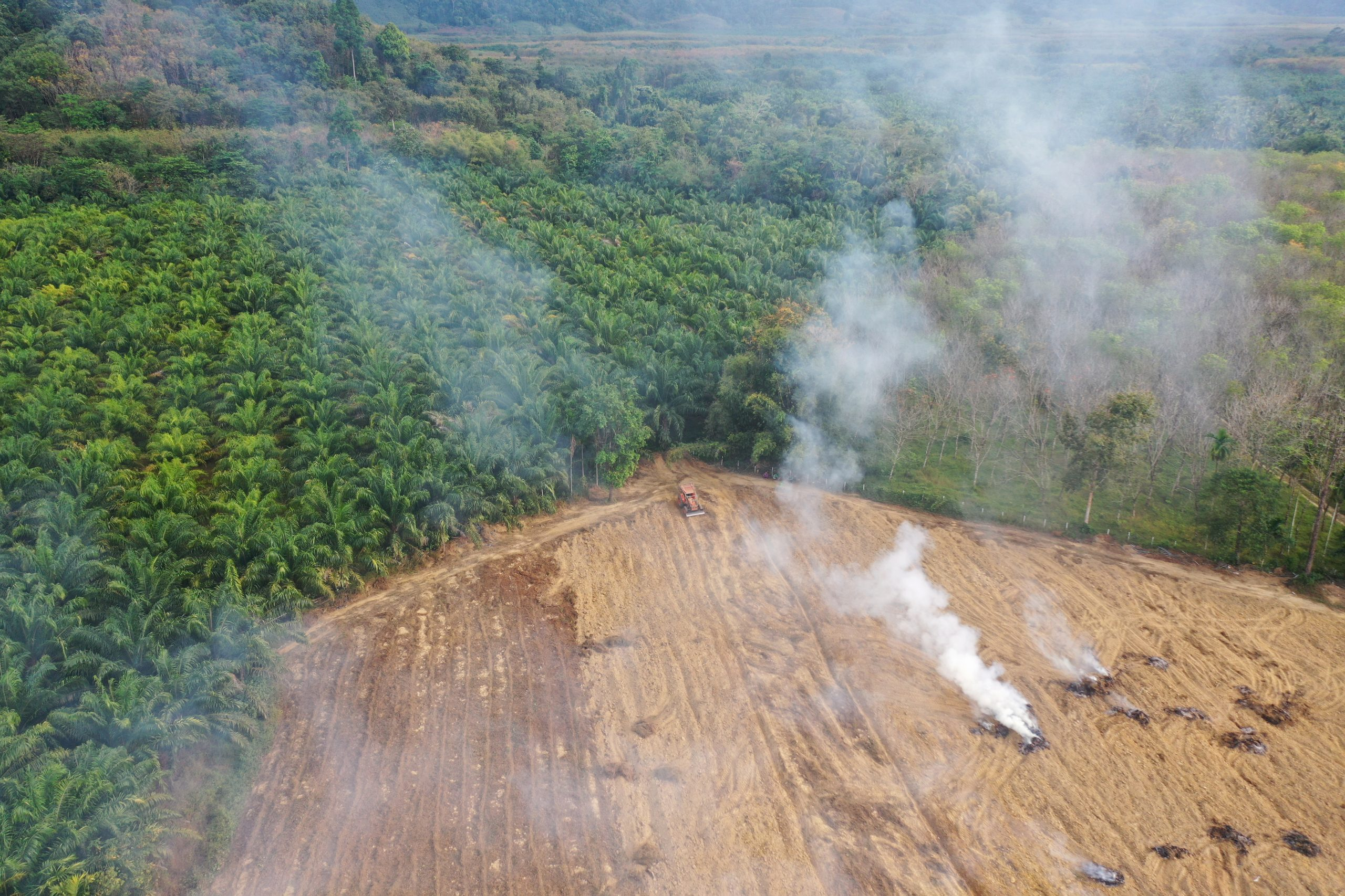 Deforestation and fire as rainforest burned to make way for oil palm plantation