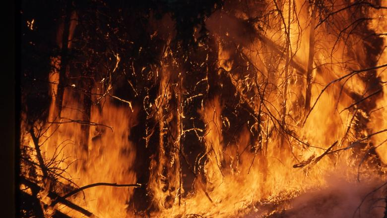 Wildfires becoming harder to control (10 Aug 2021)